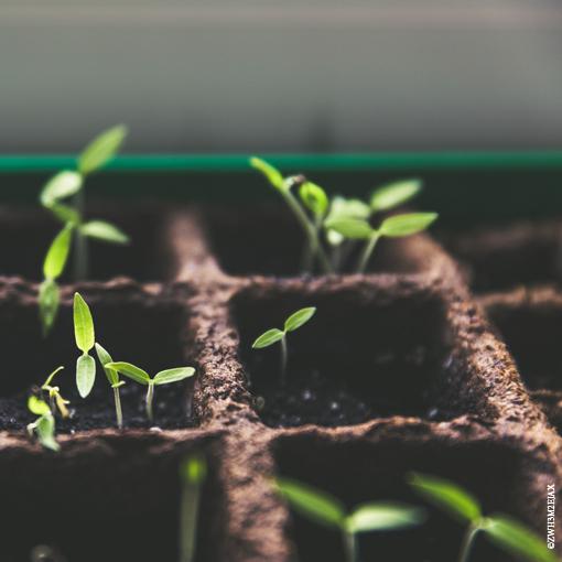 permaculture_printemps