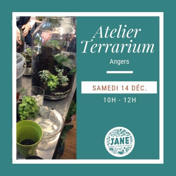 décembre terrarium angers