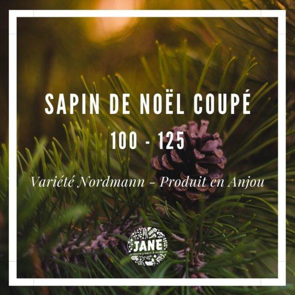 sapin-de-noel-coupe-100-125