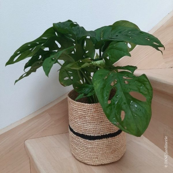 monstera adansonii mask